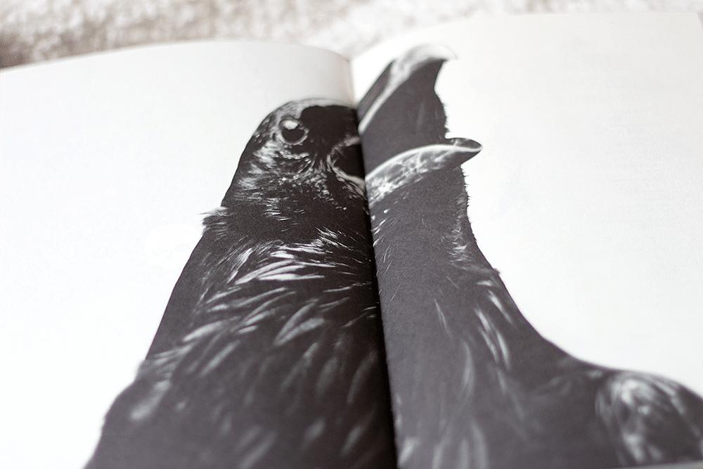 Os pássaros, de Frank Baker